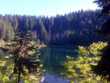 pretty forest with lake